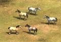 AoE2 DE horses