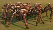 Молодой паук-охотник