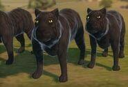 Жуткая пантера