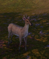 Hetian Sheep.png