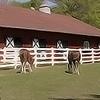 Technology.Horsemanship.png