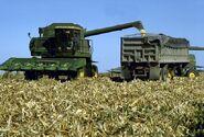 Combine-harvesting-corn