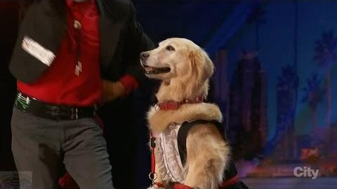 America's Got Talent 2016 Jose & Carrie A Man & His Dancing Partner Dog Full Clip S11E01