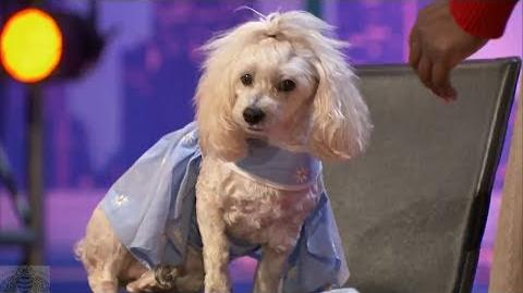 America's Got Talent 2017 Edna & Mia Moore the Counting Dog Full Audition S12E02