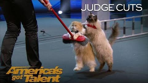 The Savitsky Cats Trained Cats Perform Amazing Tricks With Catitude - America's Got Talent 2018