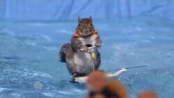 Twiggythewaterskiingsquirrel.jpg