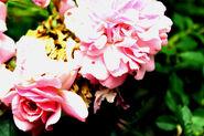 Cape Cod Flowers