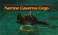 Nerine caverna cego.jpg