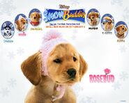 Snow buddies rosebud