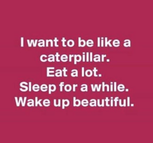 Caterpillarquote.png