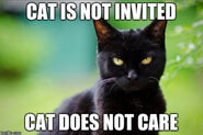 Demoncat doesn't care