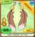 Rare feather earrings.png