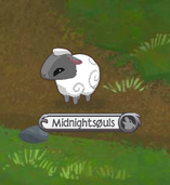 Sheep Standing.png