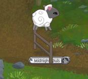 Sheep Playing.png