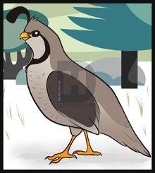 How-to-draw-a-quail 12 000000003189 4.jpg