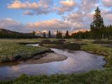 Enchanted Meadows