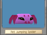 Pet Jumping Spider