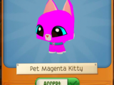 Pet Magenta Kitty