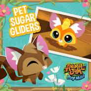 Pet Sugar Gliders In Play Wild