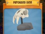 Fossil On Display