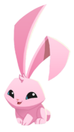 Pink+Bunny