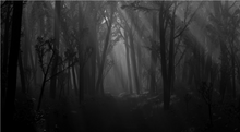 Bosque oscuro.png