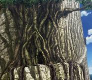 Senjuso Tree