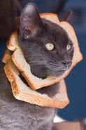Cat-breading-sandwich-kittysolo-photography