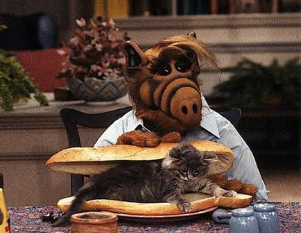 Cat_sandwich.jpg