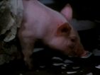 Cerdo-Svankmajer