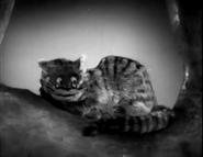 Cheshire-1933