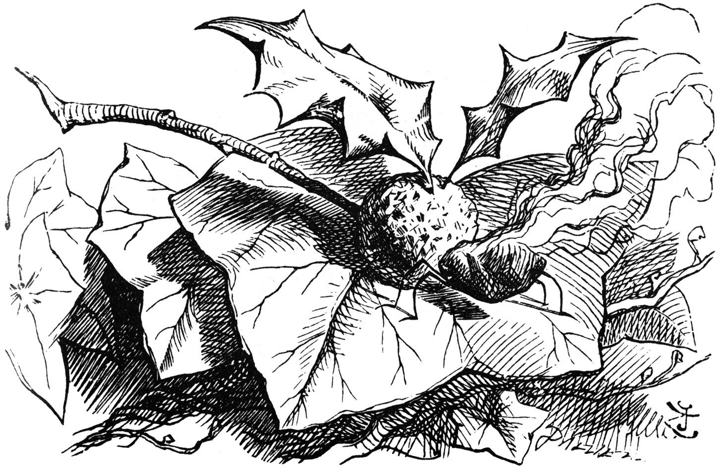 Tenniel-Dragonfly.jpg
