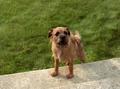 Cachorro-1999