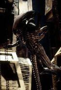 Alien still30