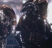 Alien Resurrection still4