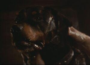357px-Spike the dog.jpg