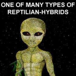 Gray reptilian