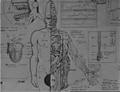 Remulakian bio m07