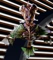 Flying Gurnard Alien