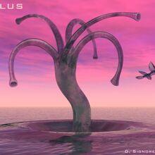 Solaris-Agilus.jpg