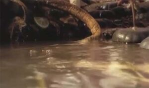 Scavian Slug.jpg