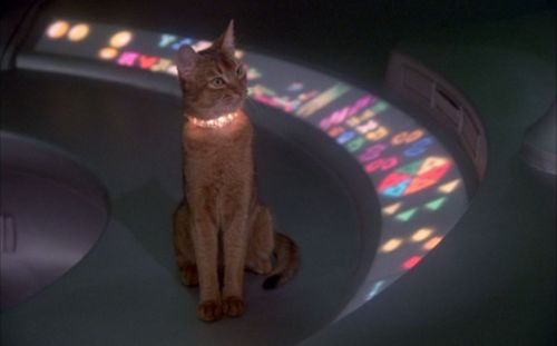 Cat (The Cat from Outer Space)