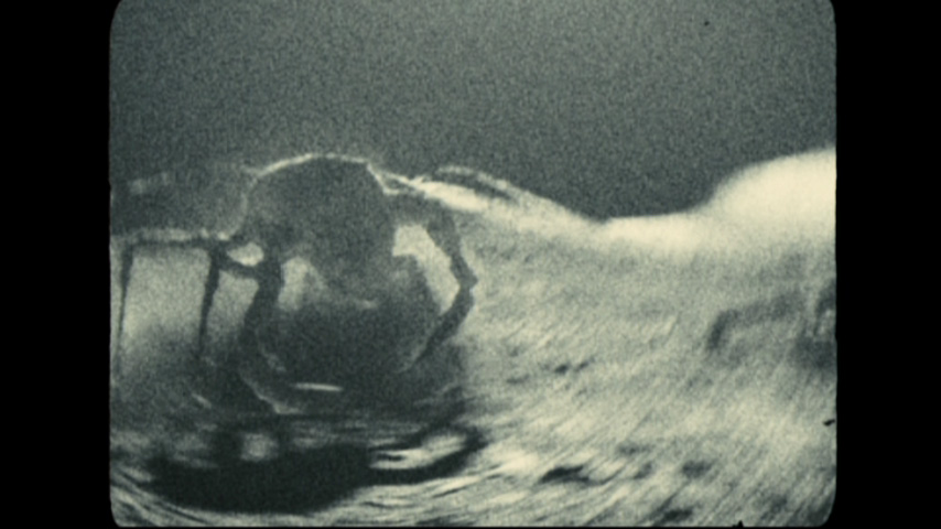 Alien (Apollo 18)