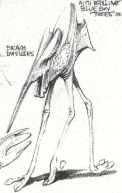 Beach-Dweller