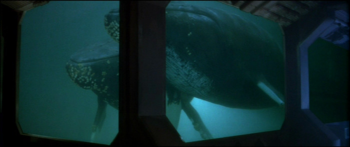 Humpback Whale (Star Trek)