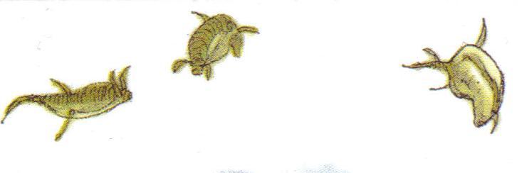 Acrobatic Fish