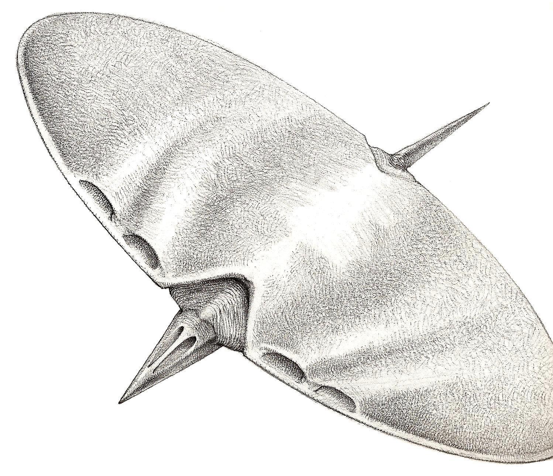 Diskflyer