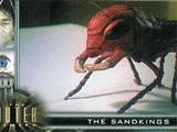 Sandking