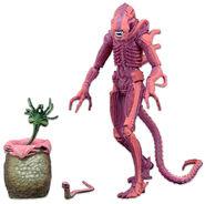 PinkXenomorph