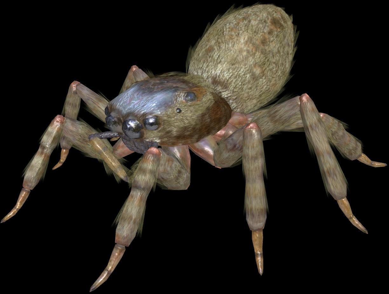 Assault Spider